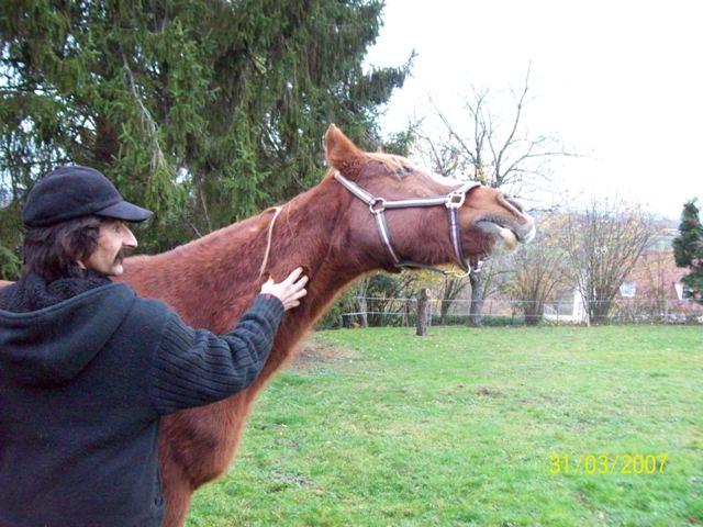 (Dpt 23) QUIDY, poney 28 ans réservé par Sabnat23 !!!!!!!! décédé De_tou13