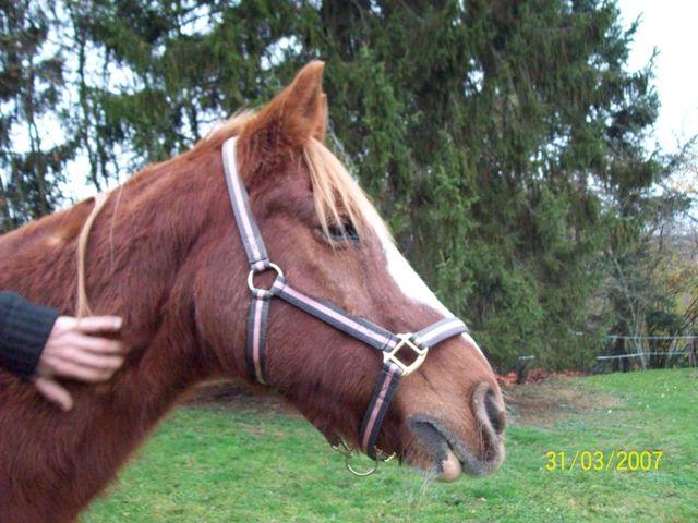 (Dpt 23) QUIDY, poney 28 ans réservé par Sabnat23 !!!!!!!! décédé De_tou14