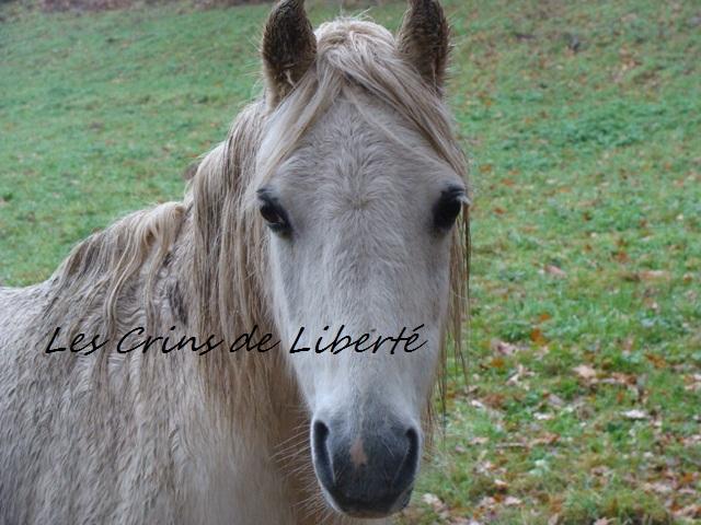 (Dpt 23) GENEREUX, poney ONC réservé par Sabnat23 !!!!!!!!!!!!!!!! (Nov 2011) Dsc00410