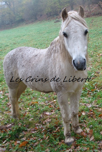 (Dpt 23) GENEREUX, poney ONC réservé par Sabnat23 !!!!!!!!!!!!!!!! (Nov 2011) Dsc00413