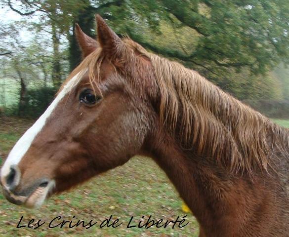 (Dpt 23) QUIDY, poney 28 ans réservé par Sabnat23 !!!!!!!! décédé Dsc00417