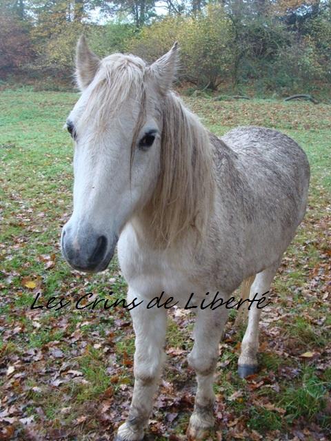 (Dpt 23) GENEREUX, poney ONC réservé par Sabnat23 !!!!!!!!!!!!!!!! (Nov 2011) Dsc00510