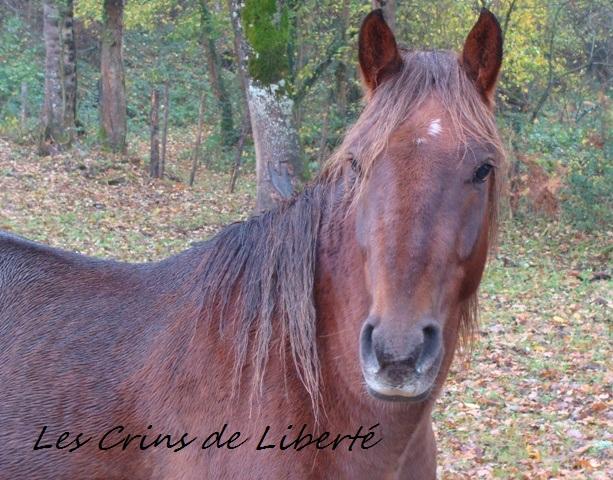 (Dpt 23) UTO, poney 4 ans, réservé par wakan11 !!!!!!!!!!!!!!!! (Déc 2011) - Page 5 Dsc00513
