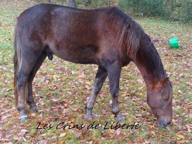 (Dpt 23) UTO, poney 4 ans, réservé par wakan11 !!!!!!!!!!!!!!!! (Déc 2011) - Page 5 Dsc00514