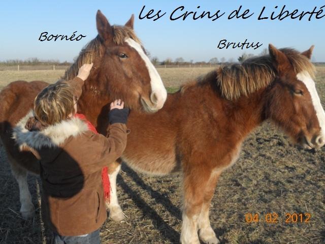 Dpt 17, Brutus, trait breton, réservé par Sergei58 !!!!!!!!!!!!!!!!!! (Juin 2012) - Page 2 Dscn6113