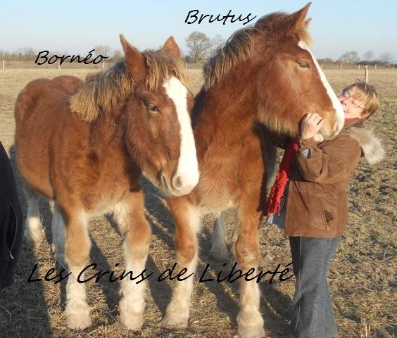 Dpt 17, Brutus, trait breton, réservé par Sergei58 !!!!!!!!!!!!!!!!!! (Juin 2012) - Page 2 Dscn6114
