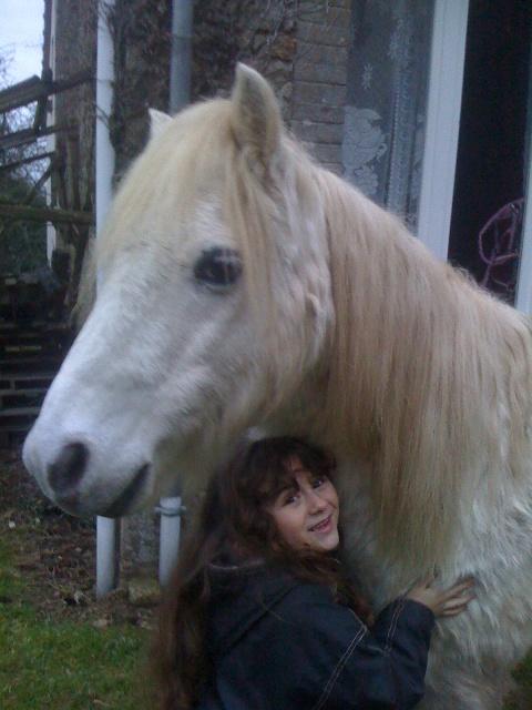 (Dpt 23) QUIDY, poney 28 ans réservé par Sabnat23 !!!!!!!! décédé Janvie10