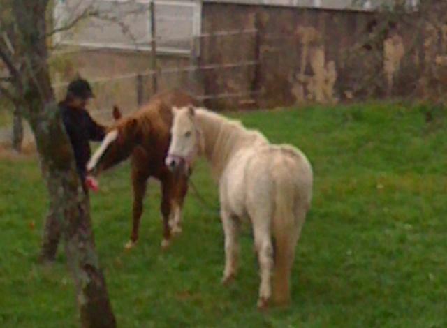 (Dpt 23) QUIDY, poney 28 ans réservé par Sabnat23 !!!!!!!! décédé Poneys12