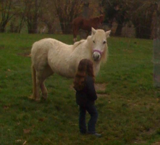 (Dpt 23) QUIDY, poney 28 ans réservé par Sabnat23 !!!!!!!! décédé Poneys14