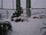 Nevicata Chieti Scalo 15-16 dicembre 2007 Neve_112