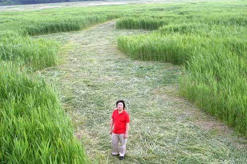 Primer y gigantesco cropcircle en Corea del Sur. Con fotos Korea_12