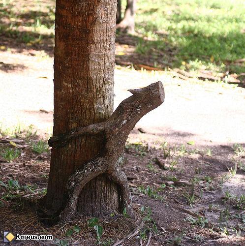 Maintenant je sais comment naissent les arbres ! 18imag10