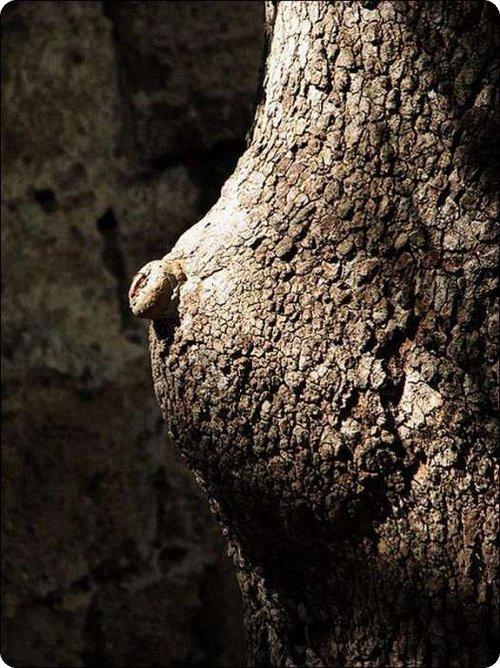Maintenant je sais comment naissent les arbres ! Arbre_10