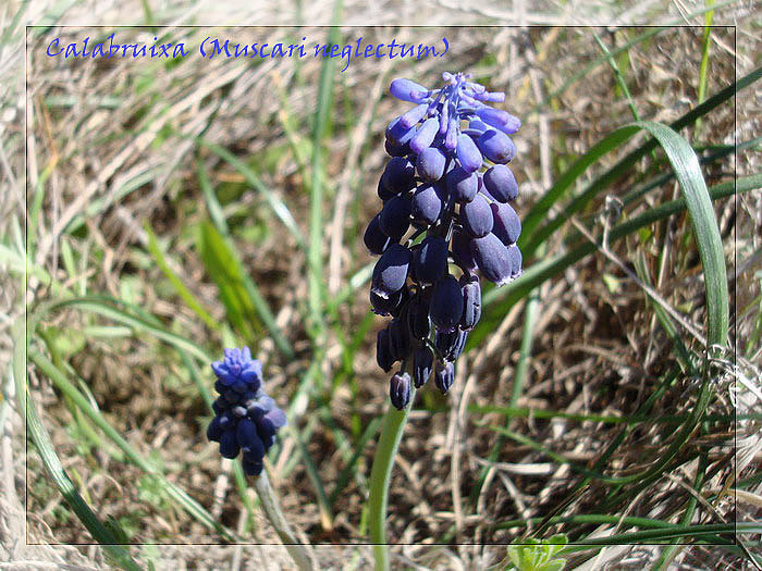Diumenge 06-04-2008  Santpedor-Balsareny-S.Cugat-Santpedor Calabr10