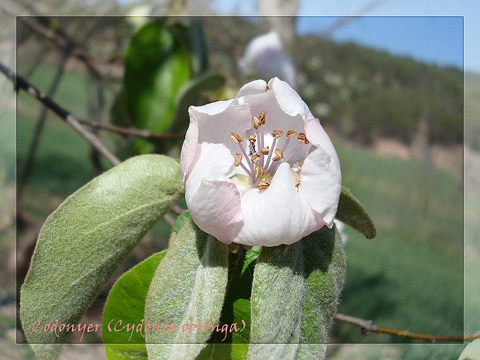 Diumenge 06-04-2008  Santpedor-Balsareny-S.Cugat-Santpedor Codony10