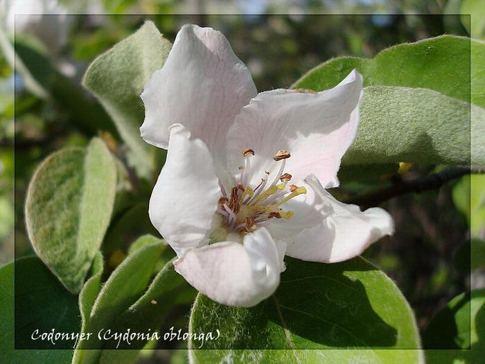 Dimecres 16-04-2008 Codony12