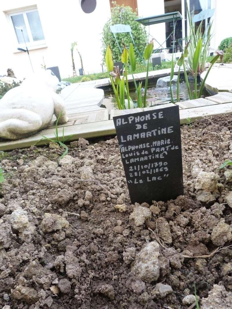les poëmes du jardin des poëtes Crocos12