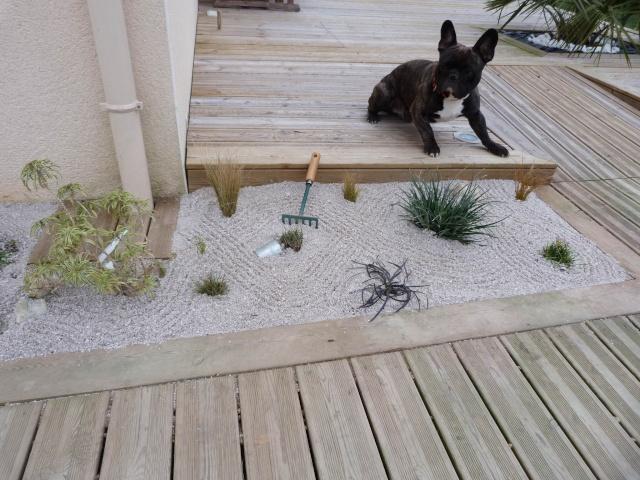 mon jardin zen P1070615