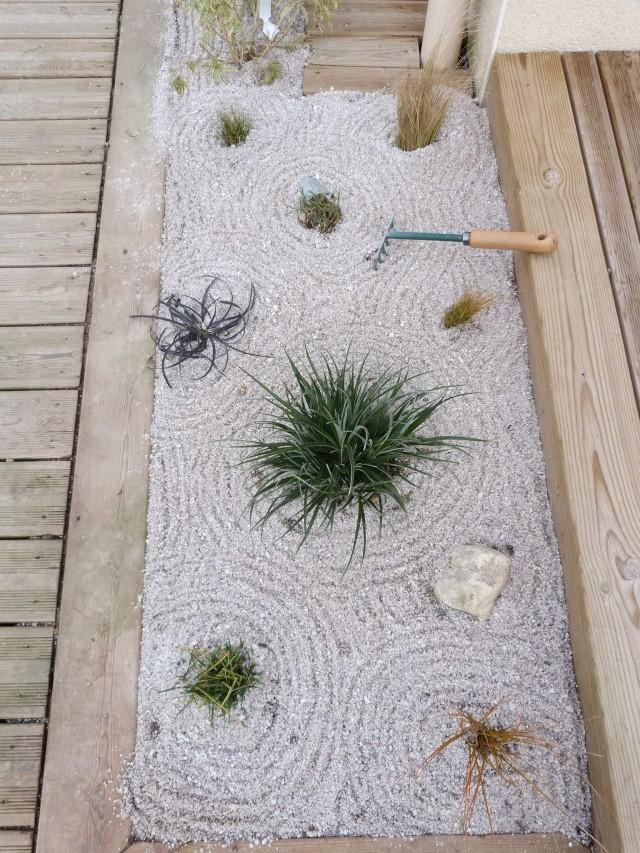 mon jardin zen - Page 2 P1070621