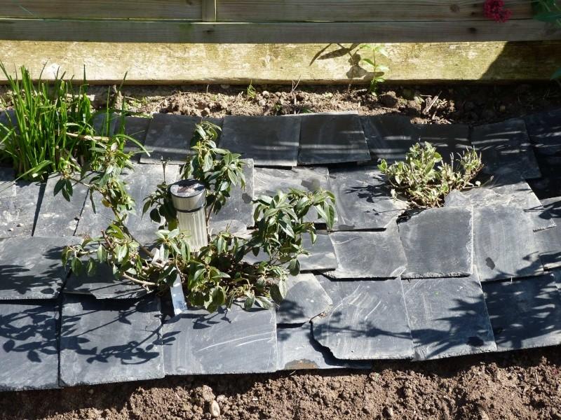 anti mauvaises herbes P1100414