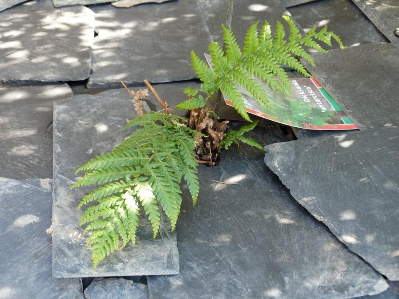 anti mauvaises herbes P1100415