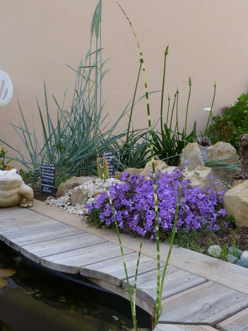 Les plantes aquatiques ou/et palustres - Page 2 P1100662