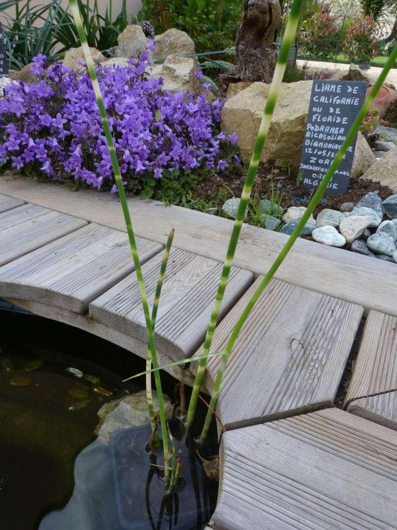 Les plantes aquatiques ou/et palustres - Page 2 P1100663