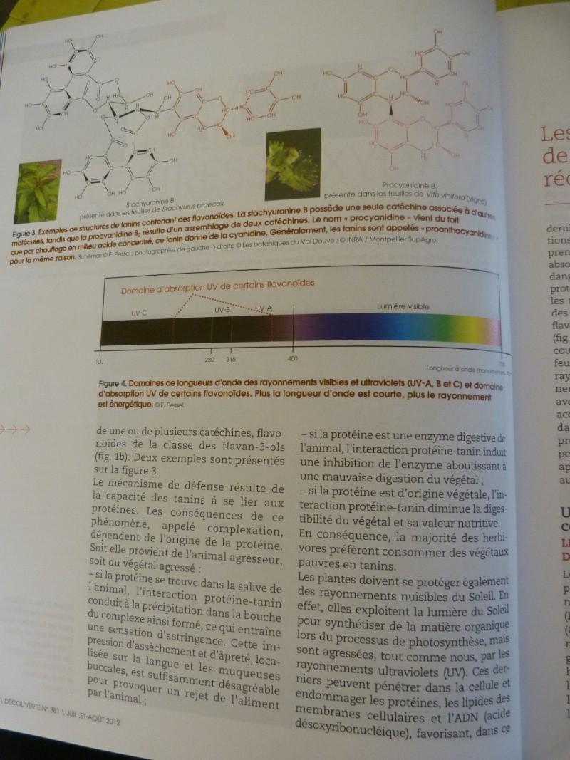 flavonoïdes et lutte contre le stress oxydant P1190954