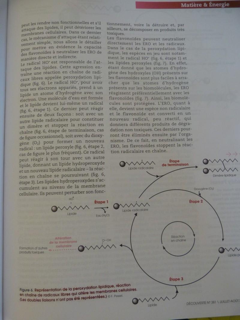 flavonoïdes et lutte contre le stress oxydant P1190959