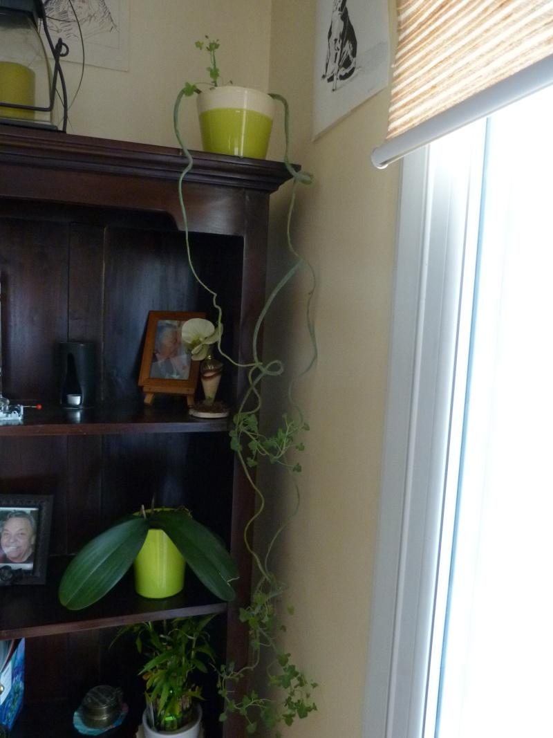 mes plantes d'intérieurs P1200314
