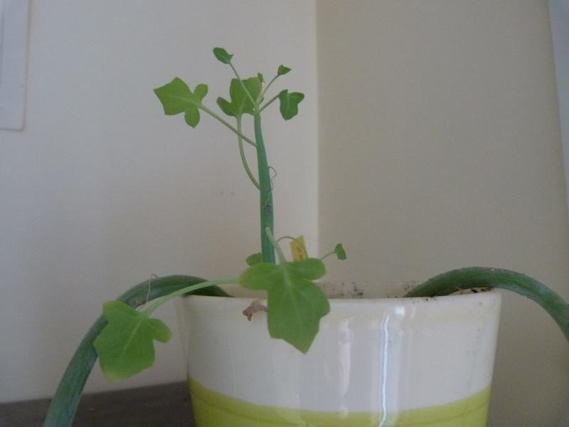 mes plantes d'intérieurs P1200316