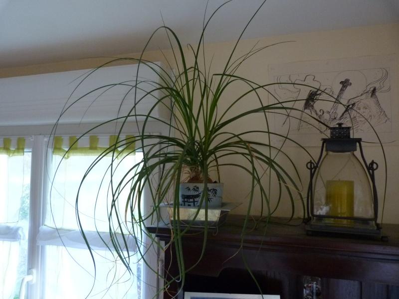mes plantes d'intérieurs P1200317