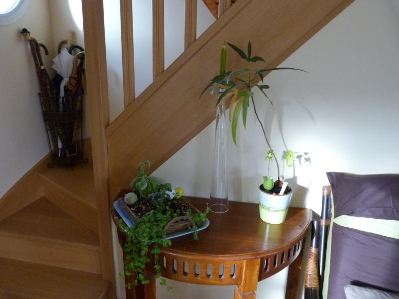 mes plantes d'intérieurs P1200318