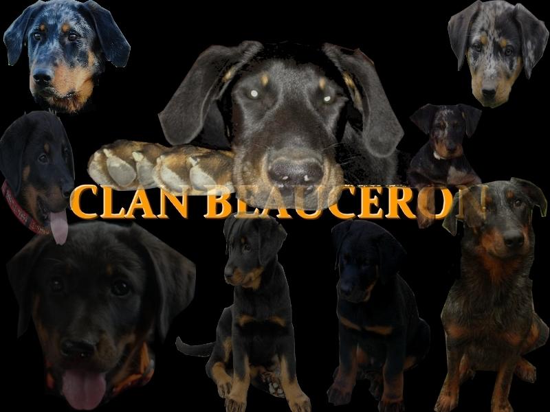clan beauceron portail - Portail Clan_b13