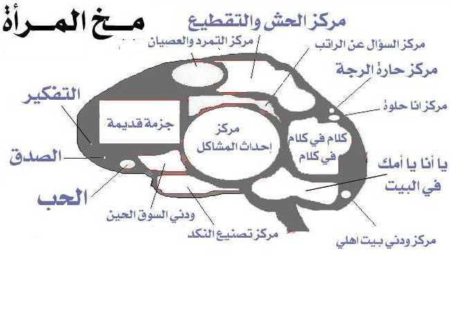 بالتفصيل مخ المرأة هههههههههههههههه Fembra10