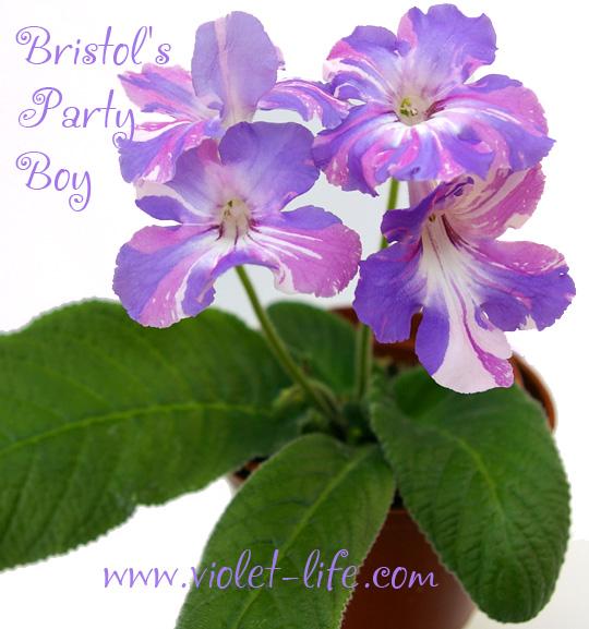 Bristol's Party Boy    Bristo10