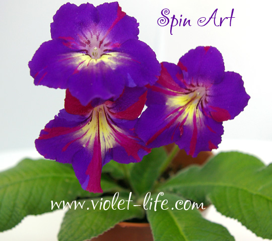 Spin Art   (D. Thompson)   Spin_a10