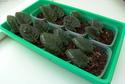 Урок 1. Вегетативное размножение сенполии, листовым черенком. F711