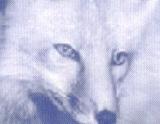 A travers l'oeil du prédateur