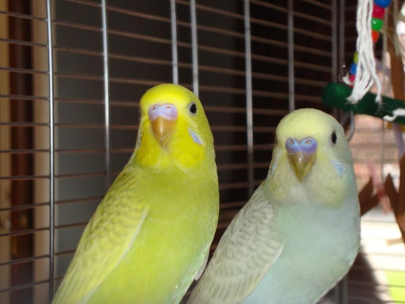 Je vous présente Bibi et Coco! Dsc03410