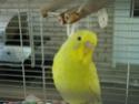 Je vous présente Bibi et Coco! Dsc03618