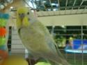 Je vous présente Bibi et Coco! Dsc03619