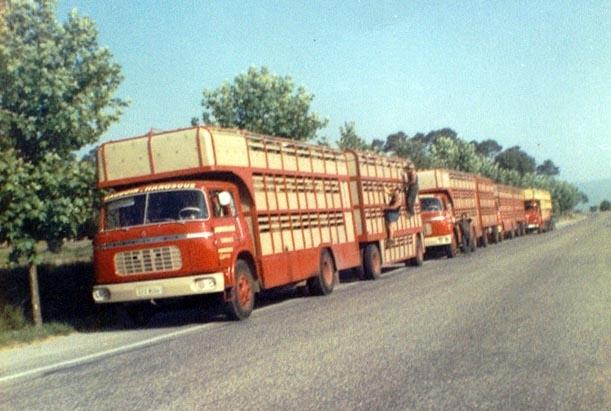 Des photos de camions bétaillères à moutons et d'autres photos de camions aussi conduit par Henry Elie . - Page 4 Berlgr24