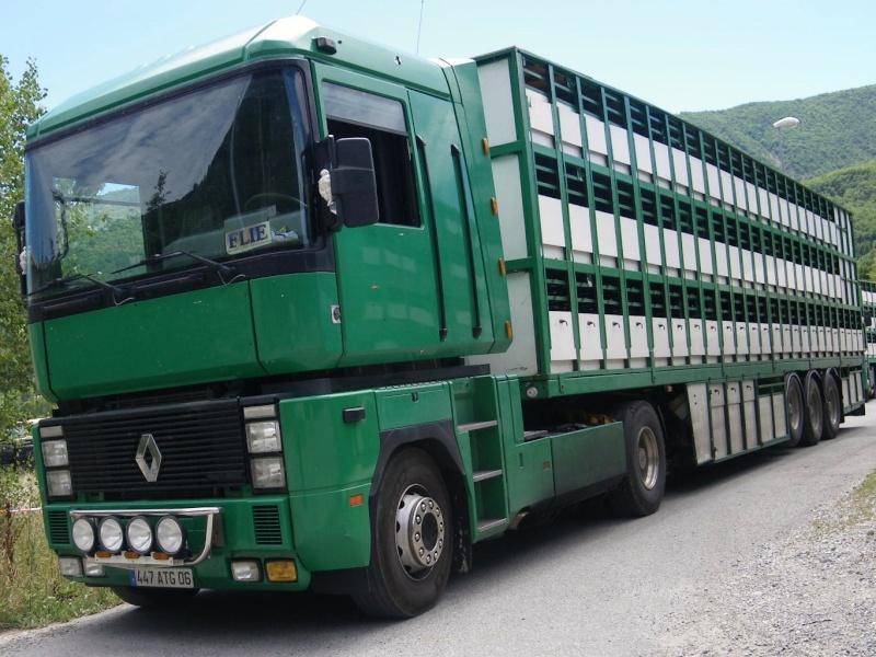 Des photos de camions bétaillères à moutons et d'autres photos de camions aussi conduit par Henry Elie . - Page 4 Transh28