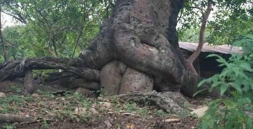Maintenant je sais comment naissent les arbres ! 24980210