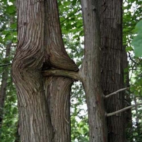 Maintenant je sais comment naissent les arbres ! 44ec8f10