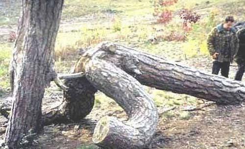 Maintenant je sais comment naissent les arbres ! 996b3610