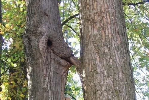 Maintenant je sais comment naissent les arbres ! F8802c10