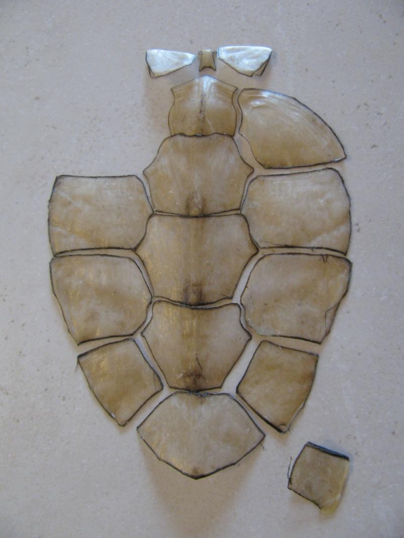 puzzle d'écailles de tortue 00910