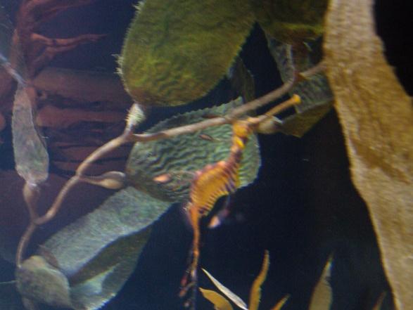 Nausicaa musée océanographique de Boulogne sur mer Hippoc11
